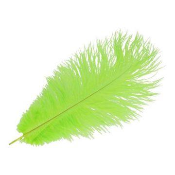 Feder Lime - 22 cm