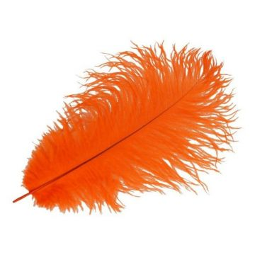 Feder Orange - 30 cm